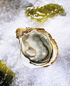 An opened oyster (Fine de Claire) on ice