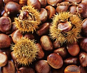 Sweet chestnuts, some with prickly shell (filling picture)