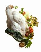 Huhn mit Federn und Gemüse