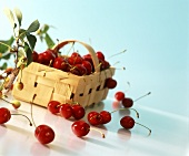 Cherries in wood chip basket