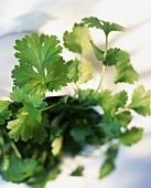 Parsley in flower pot