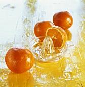 Oranges with lemon squeezer