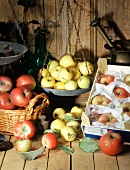 Still life with various types of apple