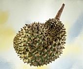 Durian (Stink fruit)