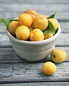 Bowl of Apricots