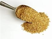 Oat grains on scoop
