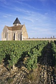 Church surrounded by vineyards in Chablis, Burgundy, France