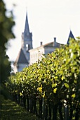 Vineyard outside town in Pomerol, France