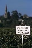 Weinberg von Chateau Vieux Maillet im Pomerol, Frankreich
