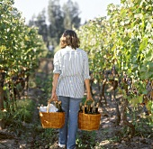 Woman carrying baskets of wine bottles in vineyard, Chile