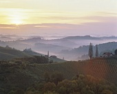 Sunrise over the vineyards at Gamlitz, Steiermark