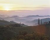 Sunrise over the vineyards at Gamlitz, Steiermark
