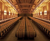 Wine cellar of the Almaviva Estate, Maipo Valley, Chile