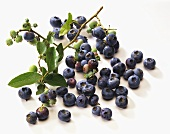 Blueberries and branch with blueberries