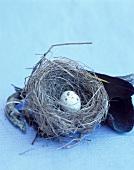 A quail's egg in nest
