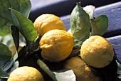 Branch with fresh lemons