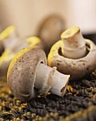 Brown mushrooms (close-up)