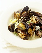 Mussels in wine stock