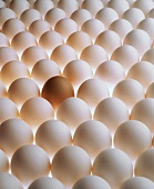 Many white eggs and one brown egg