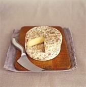 Alter Caerphilly (halbfester Käse aus Wales)