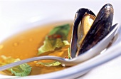 Mussel with cooking liquor