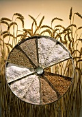 Rye and wheat: grains, crushed grains & flour in tart dish