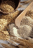 Cereals: ears, grains and crushed grains