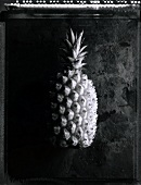 A pineapple (b/w photo)