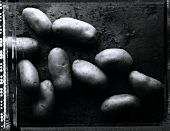 Potatoes (b/w photo)