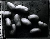 Kartoffeln (s-w-Aufnahme)