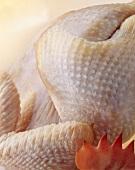 Hähnchen: Nahaufnahme von Haut und Hahnenkamm