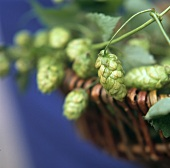 Hopbines in a wicker basket