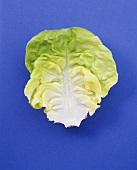 A lettuce leaf on blue background