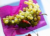 Eine Biene auf weisser Weintraube