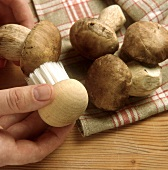 Cleaning ceps