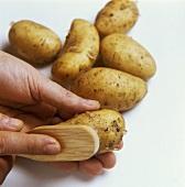 Scrubbing new potatoes