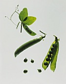 Whole and opened ripe pea pod and immature pea pod