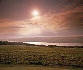 Weingut am Keuka Lake (Finger Lakes, New York, USA)