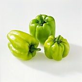 Dolma - green peppers from Turkey