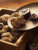 Scales and crate of black truffles