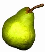 Green Williams pear