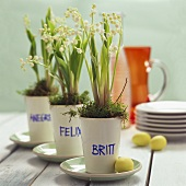 Easter decoration: lilies-of-the-valley in beakers with names