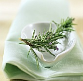 Sprig of rosemary on china dish