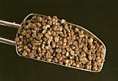 Abelmoschus grains (Abelmoschus esculentum)