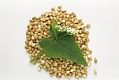 Buckwheat herb and grains
