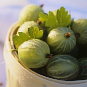 Gooseberries in wood chip basket