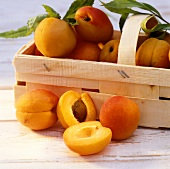 Apricots in chip basket