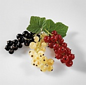 Trusses of black- white- and redcurrants