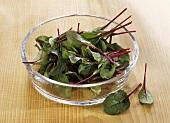 Freshly washed beetroot leaves (for salad)