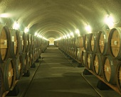 Wine cellar of Viader vineyards, Napa Valley, California